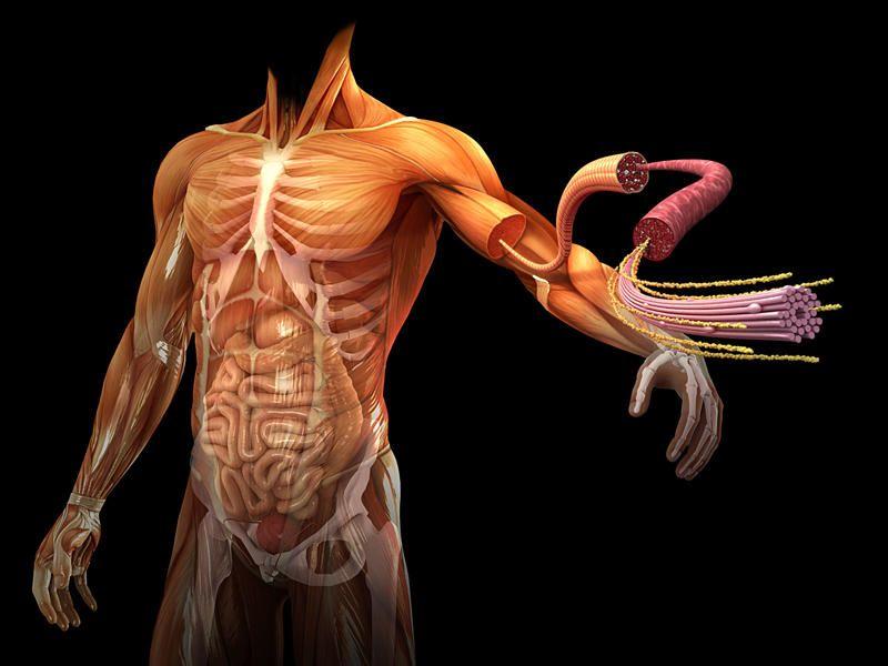 Historia de la biologia humana 2