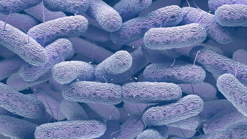 Historia de la biologia bacterias