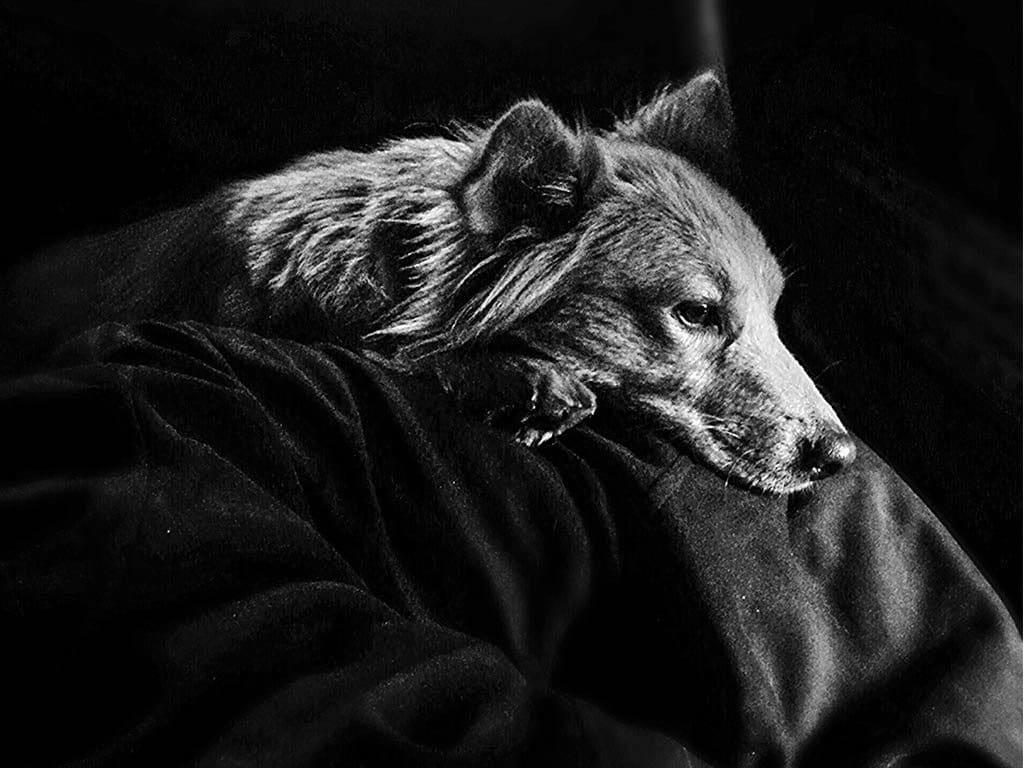 historia de la fotografía en blanco y negro