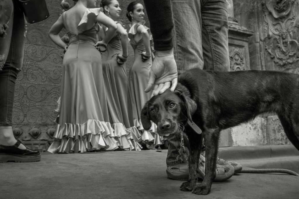 historia de la fotografía documental