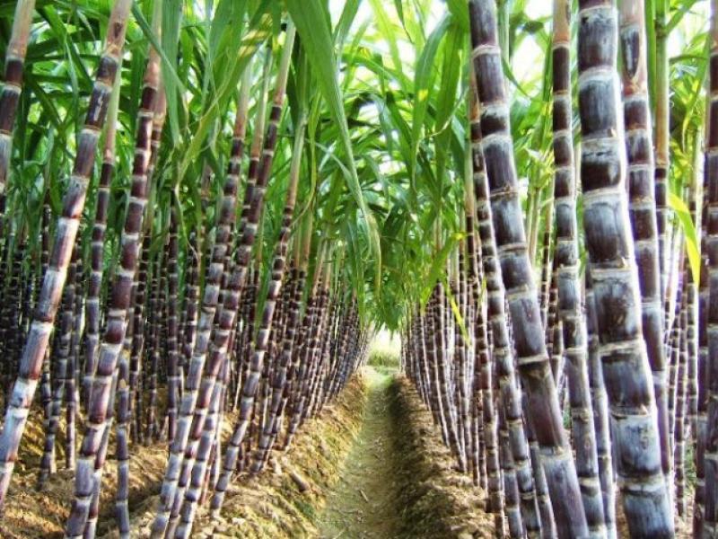 la industria azucarera y la contabilidad
