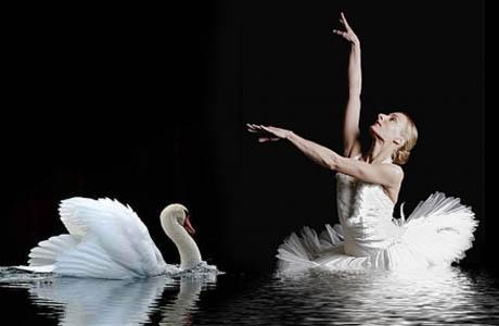 danza el lago de los cisnes
