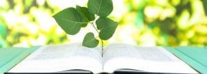 Historia de la educación ambiental: origen, en varios países, y mas