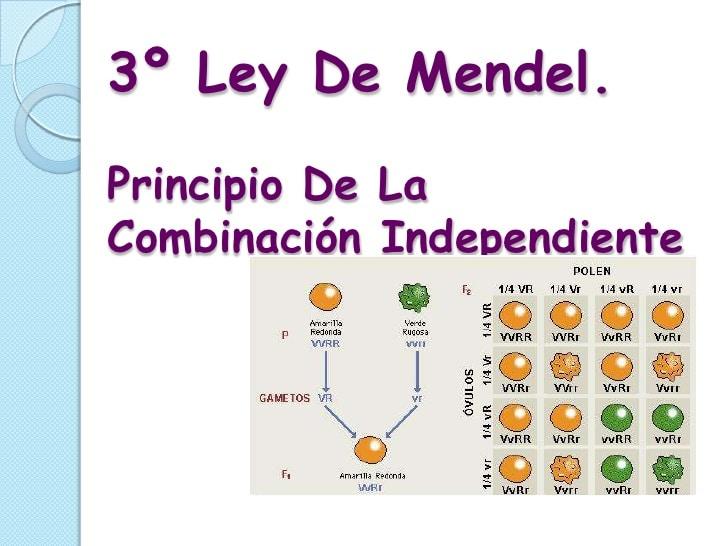 3er. ley