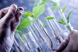 Historia de la biotecnología: origen, línea del tiempo, y mas